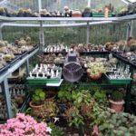 GWH mit Kübelpflanzen