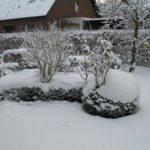 Buchsbaumhecke im Schnee