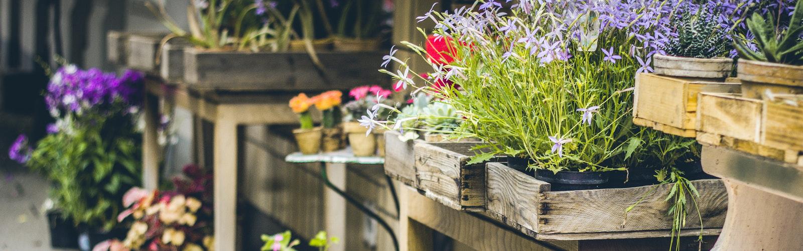 Aufmacher Garten (Frühling)